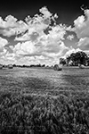 Round Bales - Series - Texas, 2014 - 0352 - Photography by Lon Casler Bixby - Copyright - All Rights Reserved - www.neoichi.com
