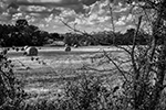Round Bales - Series - Texas, 2014 - 0361 - Photography by Lon Casler Bixby - Copyright - All Rights Reserved - www.neoichi.com