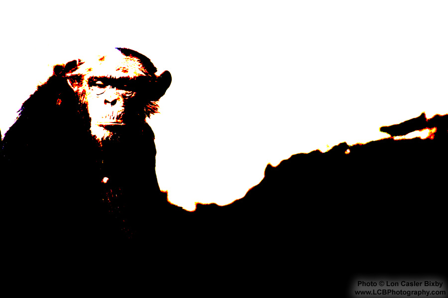 Thoughtful Chimp - Photography by Lon Casler Bixby - Copyright - All Rights Reserved - www.LCBPhotography.com