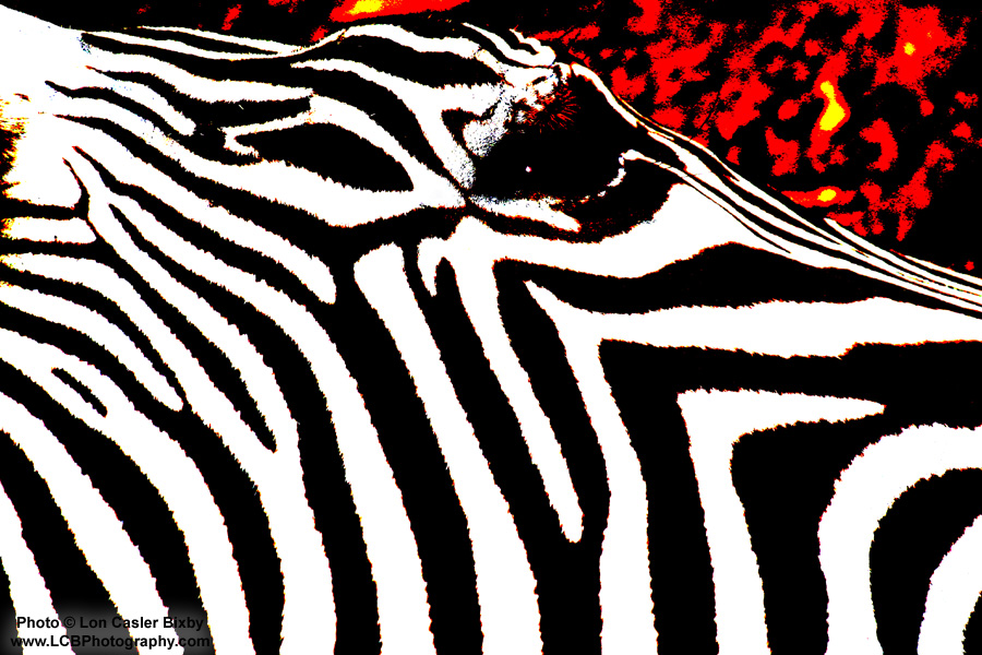 Red Zebra Head - Photography by Lon Casler Bixby - Copyright - All Rights Reserved - www.LCBPhotography.com